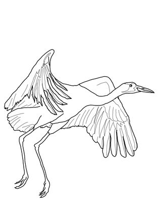 323x430 Click To See Printable Version Of Whooping Crane Fly Coloring Page