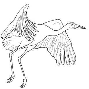 308x308 Pictures Of Cranes Coloring Pages