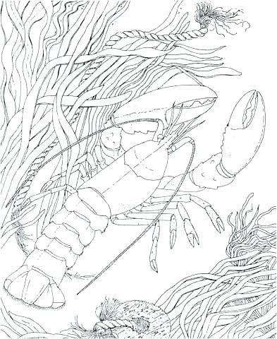 393x480 Crawfish Coloring Page Silhouette Clip Art Crayfish Illustration
