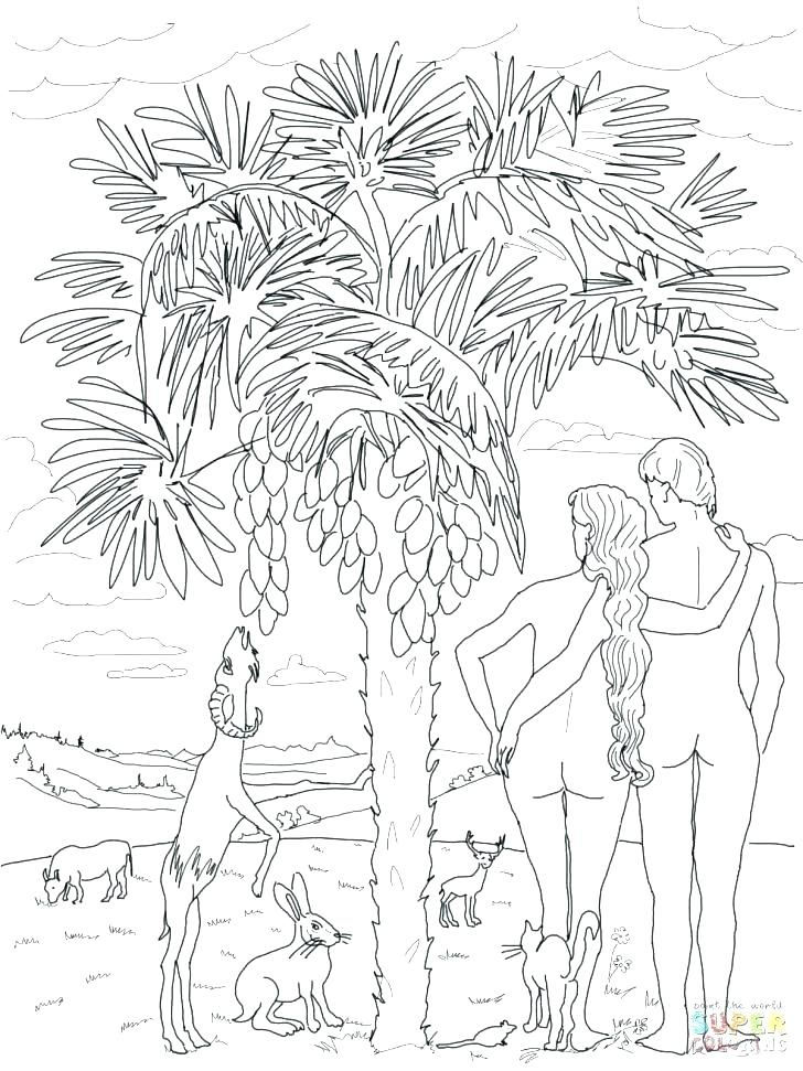 728x971 Coloring Pages God Created The Heavens And Earth Gods Creations
