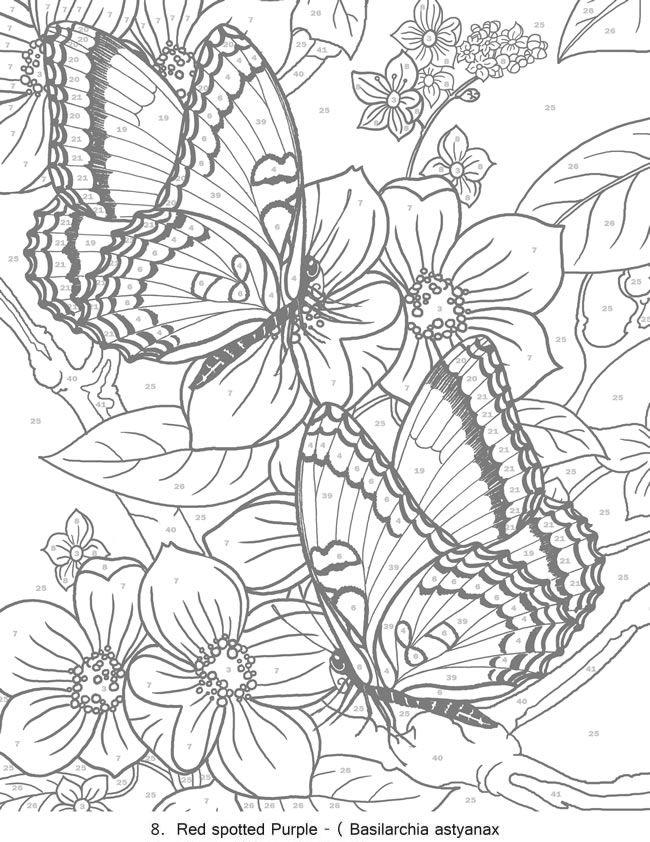 650x842 Creative Haven Butterflies Color