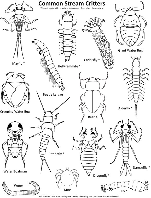 578x760 Stream Insects Coloring Page