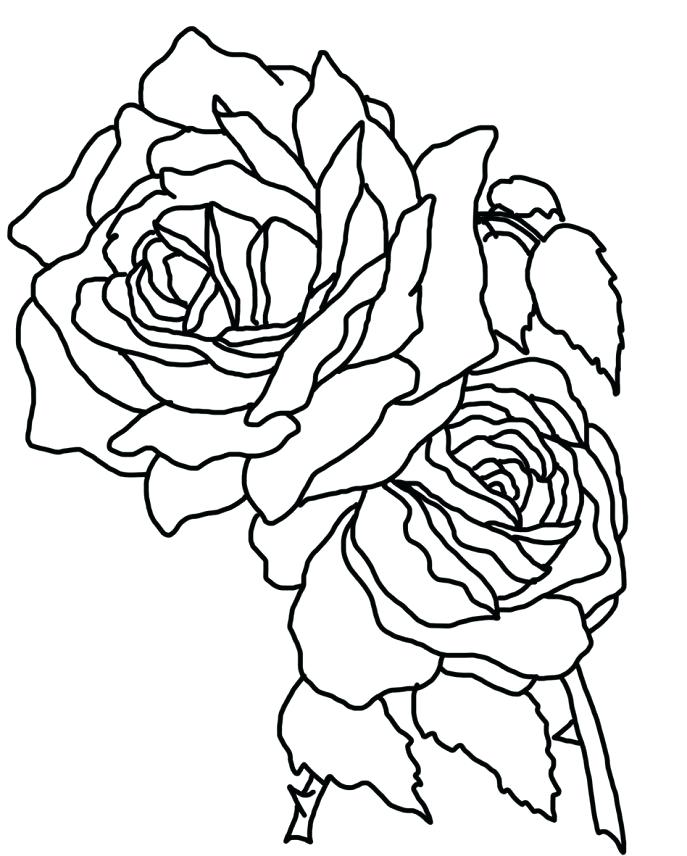 687x856 Coloring Pages Of Rose Medium Size Of Coloring Roses Coloring