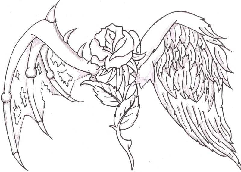 800x571 Drawn Cross Wing Rose Pencil And In Color Drawn Cross Wing Rose