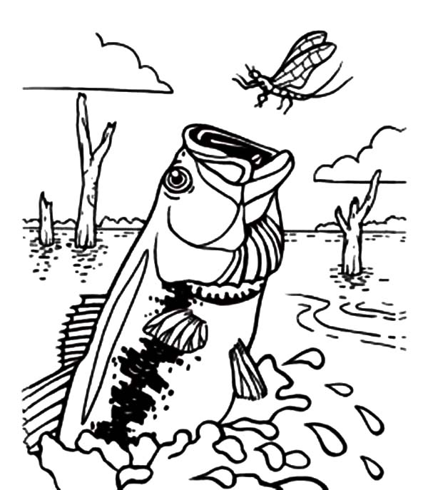 600x687 Bass Fish Catching Dragonfly Coloring Pages
