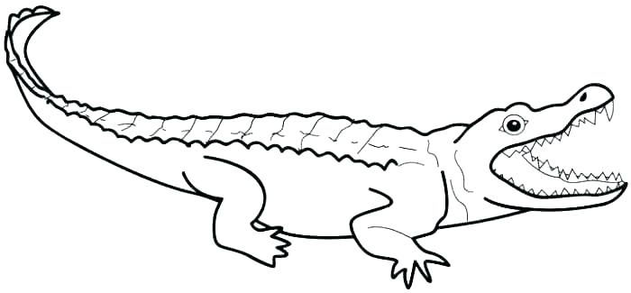 700x325 Crocodile Coloring Pages Crocodile Color Pages Alligator Color