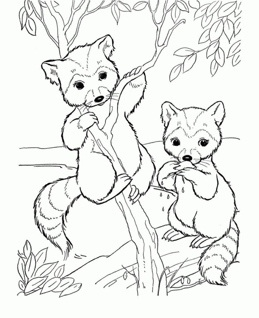 836x1024 Free Cute Raccoon Cartoon Animal Coloring Pages Printable Animal