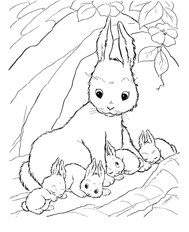 650x796 Coloring Pages Rabbit Rabbits Coloring Pages Cute Baby Bunny