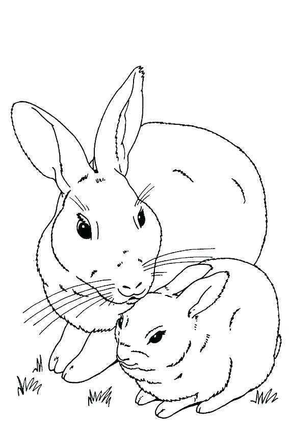 567x850 Remarkable Cute Bunny Coloring Pages Coloring Pages Of Cute Baby