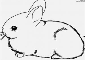300x210 Coloring Pages Of Bunnies Portraits Baby Bunny Coloring Pages