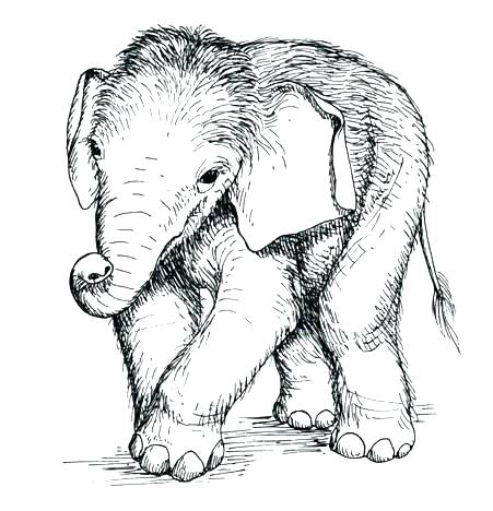 451x468 Baby Elephant Coloring Pages Cute Baby Elephant Coloring Pages