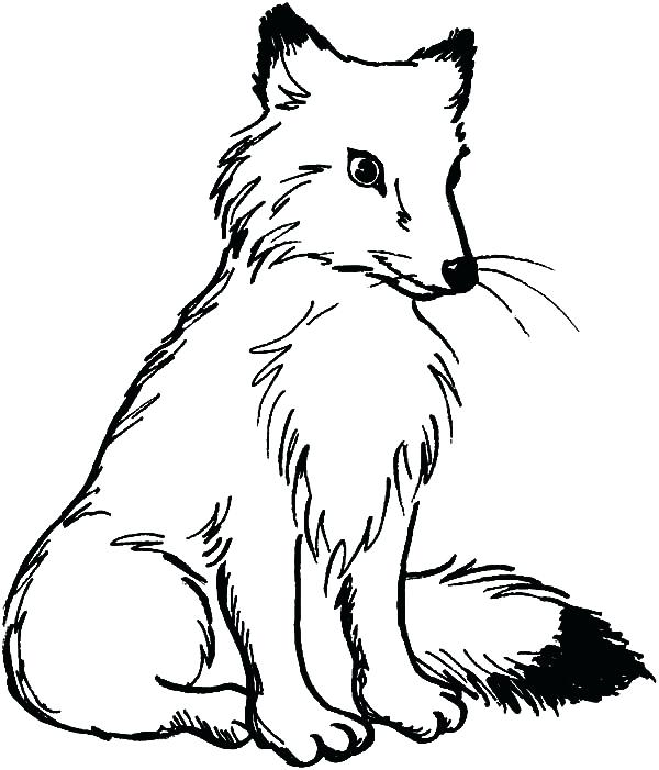 600x701 Coloring Pages Of Foxes Cute Baby Fox Coloring Page Cute Baby Fox