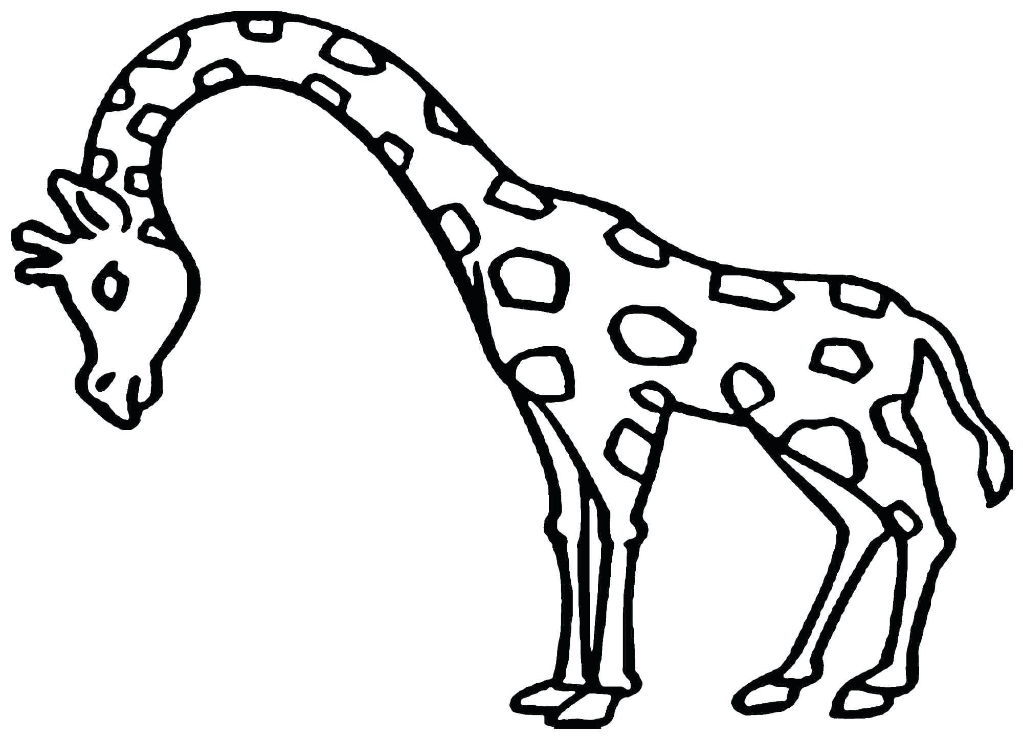 2000x1445 Cute Baby Giraffe Coloring Pages Best Of Animal Little Page Long