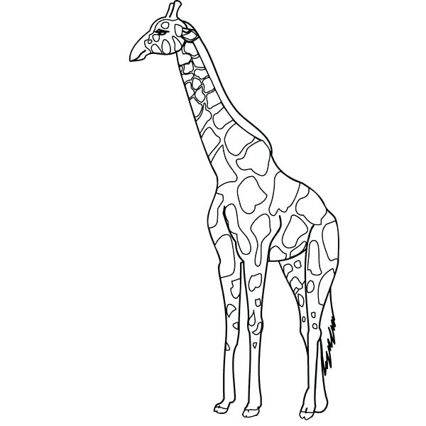 600x600 Giraffe Coloring Pictures Baby Giraffe Coloring Pages Coloring