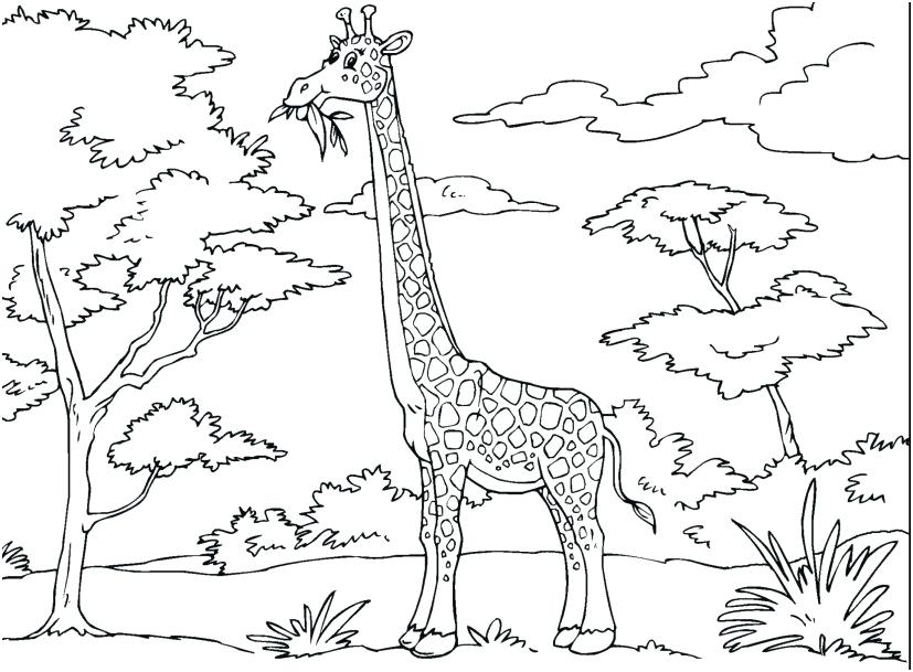 827x609 Baby Giraffe Coloring Pages