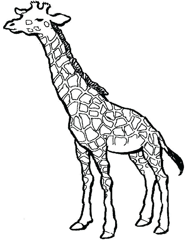 650x830 Cute Giraffe Coloring Pages