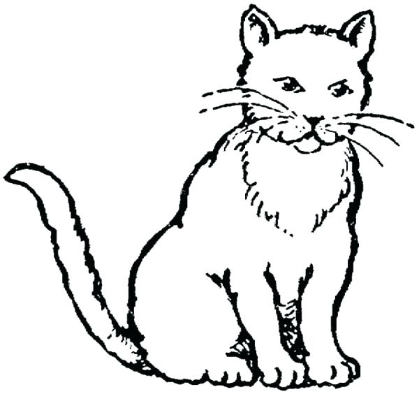 600x564 Cat Coloring Baby Cat Coloring Pages Realistic Drawing Of Kitty