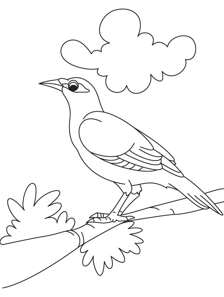 Cute Bird Coloring Pages