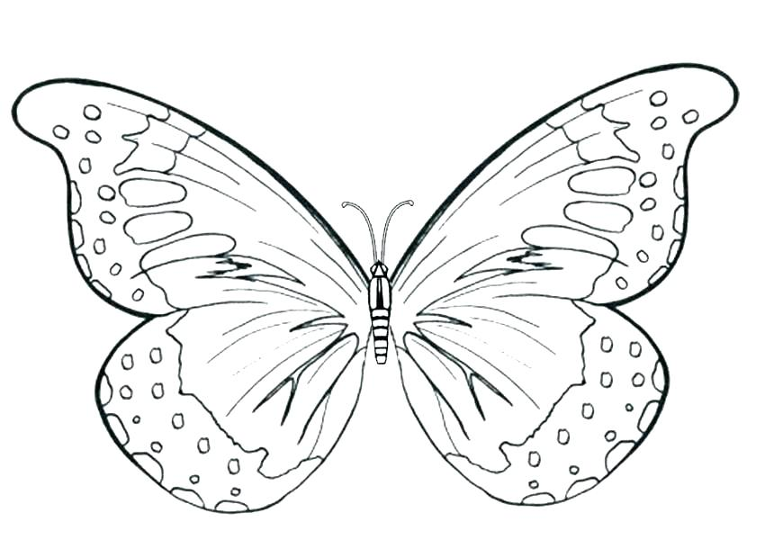 850x600 Butterfly Color Sheets Cute Butterfly Coloring Pages Butterfly