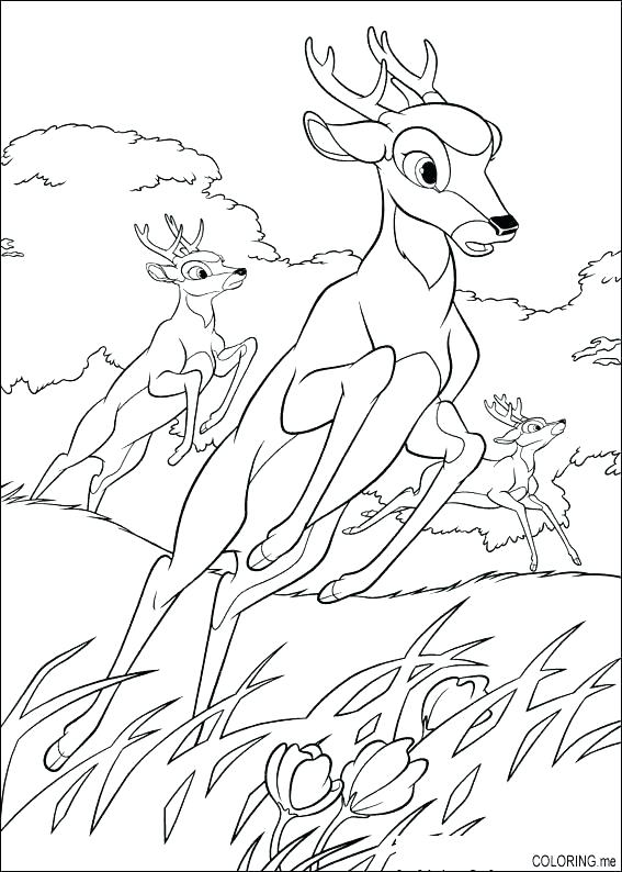 567x794 Baby Deer Coloring Pages Deer Coloring Pages Coloring Pages