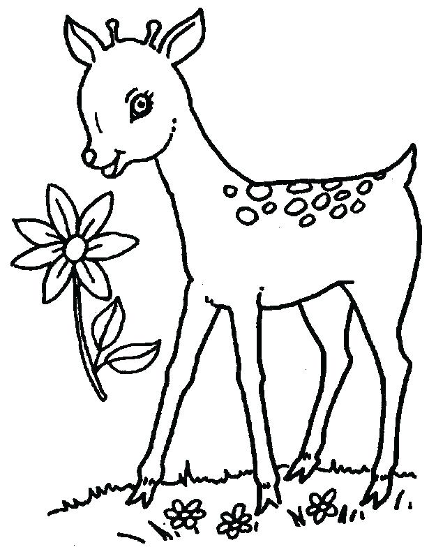 625x794 Baby Deer Coloring Pages Deer Hunting Coloring Pages Baby Deer