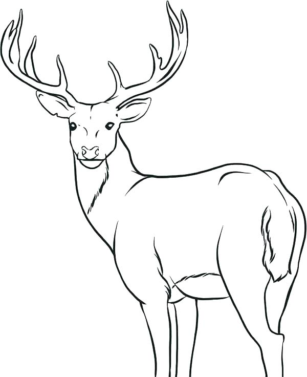 600x736 Coloring Pages Of Deer Deer Coloring Picture Cartoon Cute Deer