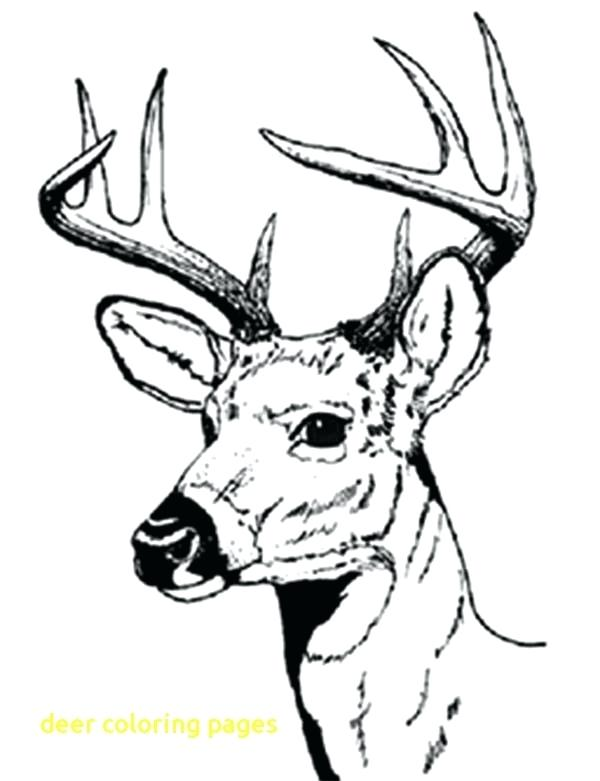 600x781 Deer Coloring Pages Deer Coloring Pages With Male Deer With Sharp