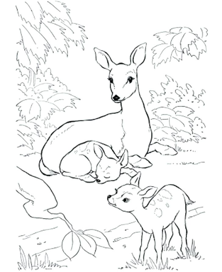 728x890 Deer Coloring Pages Download Coloring Pages Animals Little Cute
