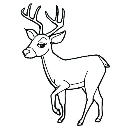 450x450 Baby Deer Coloring Pages Deepart