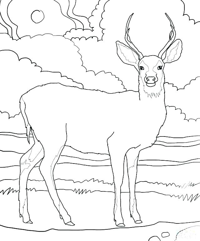 640x768 Baby Deer Coloring Pages