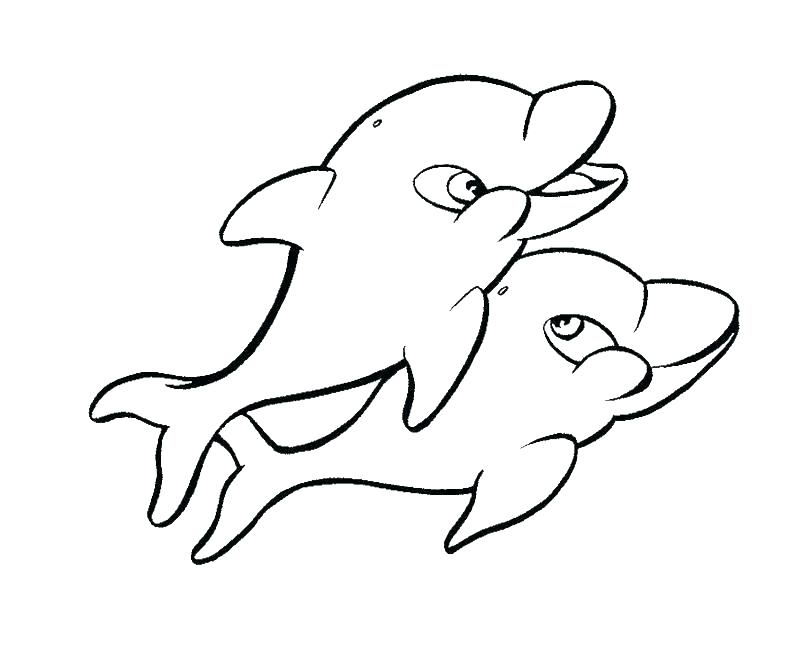 800x661 Baby Dolphin Coloring Pages Dolphin Tale Coloring Pages Coloring