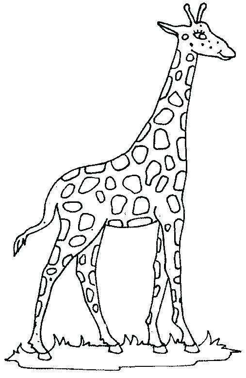 507x779 Giraffe Coloring Pages Coloring Page Giraffe Giraffe Cute Giraffe