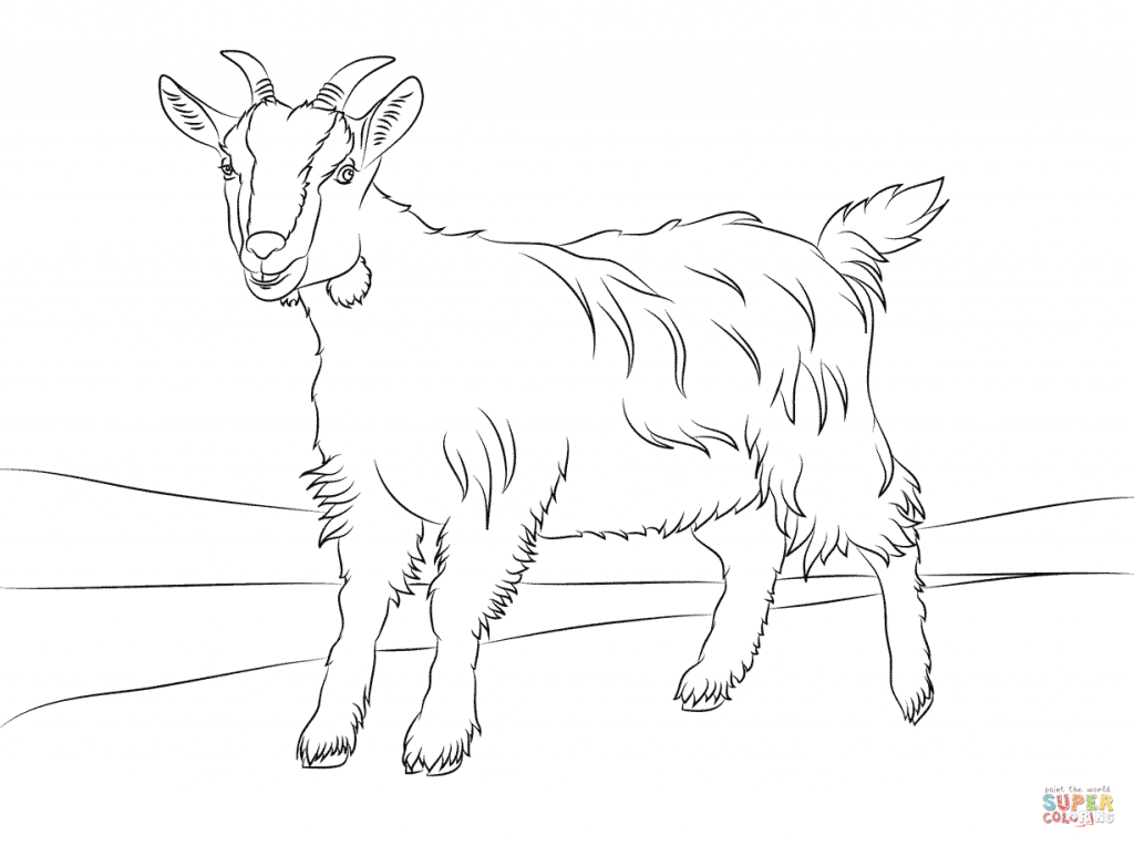 1024x764 Cute Goat For Coloring Pages