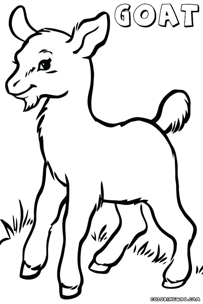 667x1000 Goat Coloring Pages Goat Coloring Pages Cute Goat Coloring Sheets