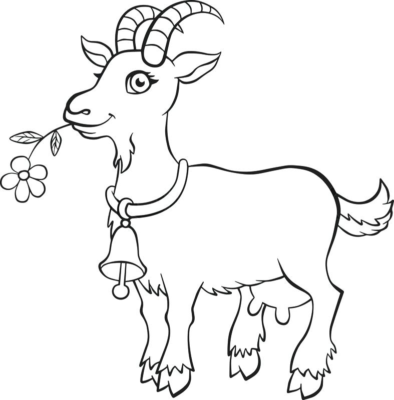 787x800 Coloring Goat
