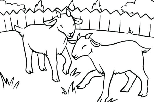 532x353 Billy Goats Gruff Printable Story Printable Coloring Goat Coloring