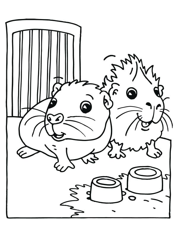 600x800 Guinea Pig Coloring Page Cute Baby Guinea Pig Coloring Page Guinea