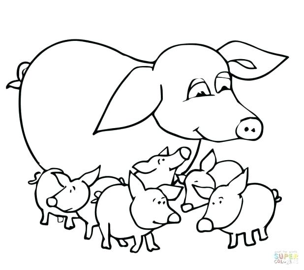 618x548 Guinea Pig Coloring Pages Coloring Pages Of Guinea Pigs Free