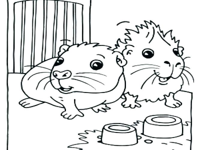 667x500 Guinea Pig Coloring Pages Guinea Pig Pictures To Color Medium Size