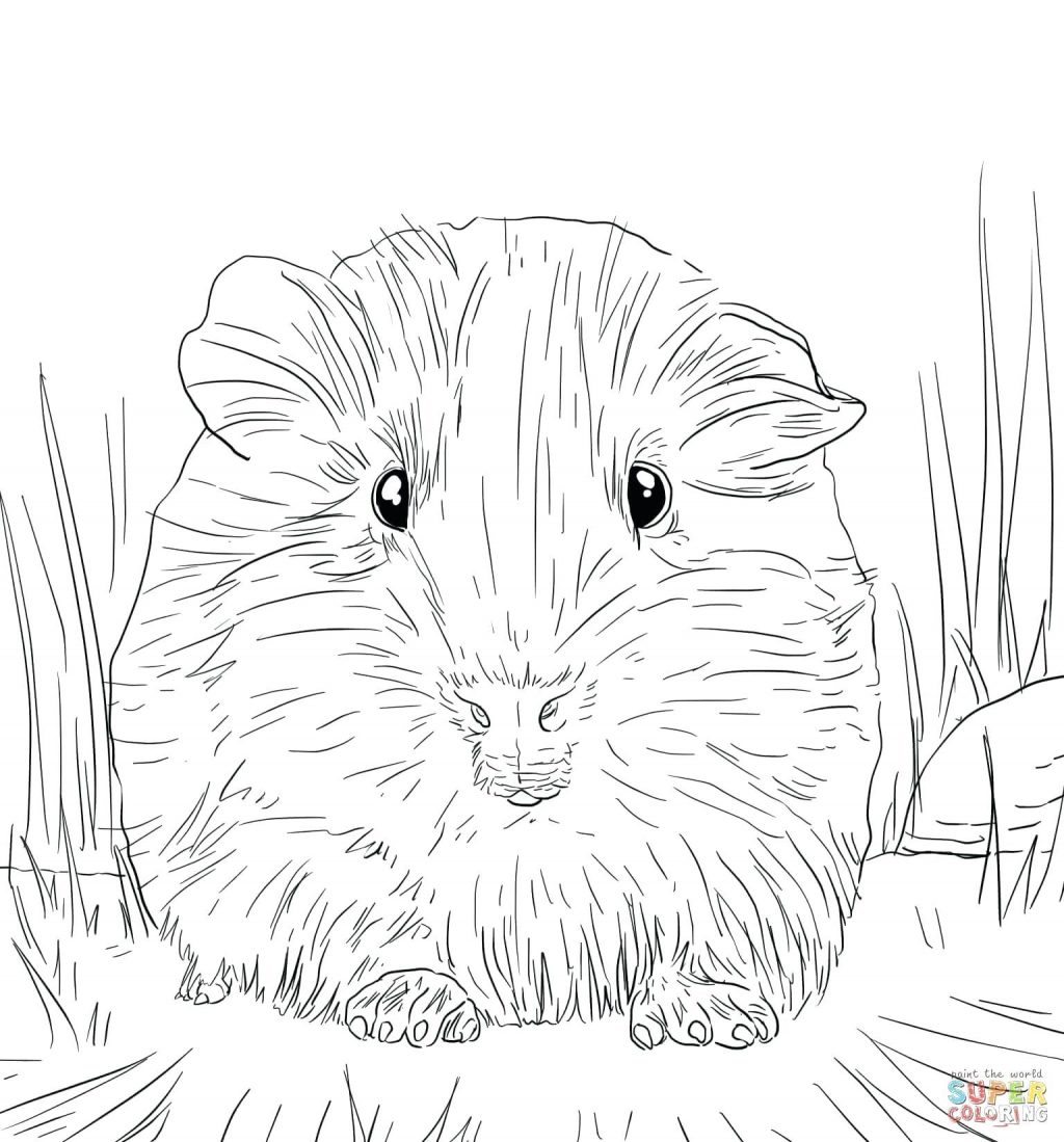 1024x1099 Coloring Page Guinea Pig Coloring Page Pages Cute Baby Guinea