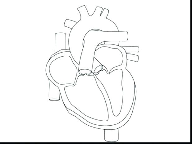 618x463 Cute Heart Coloring Pages Coloring Page Of A Heart Human Heart