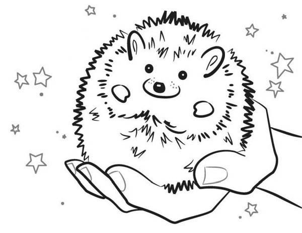 600x462 Baby Hedgehog Smiling Colouring Pages Bulk Color Embroidery