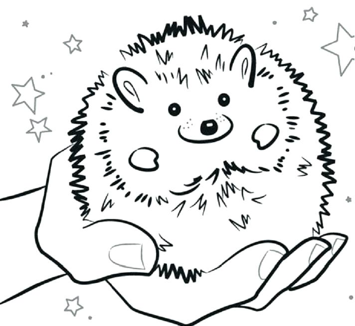 712x654 Hedgehog Coloring Pages Hedgehog Coloring Page With Hedgehog