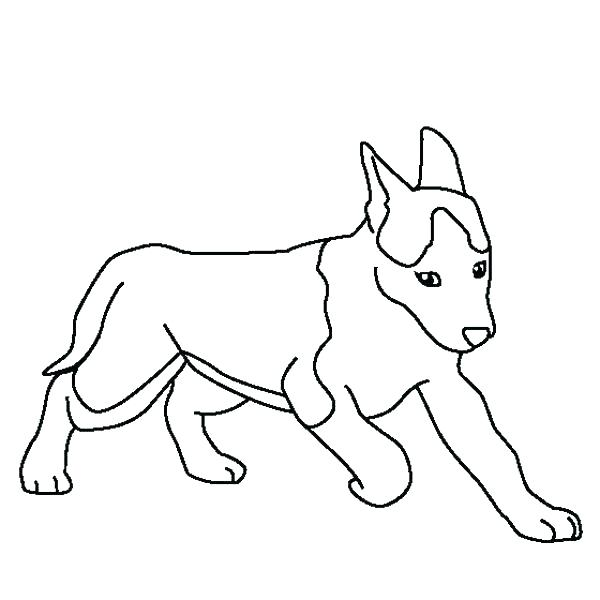 600x600 Siberian Husky Coloring Pages Husky Coloring Pages Cute Husky