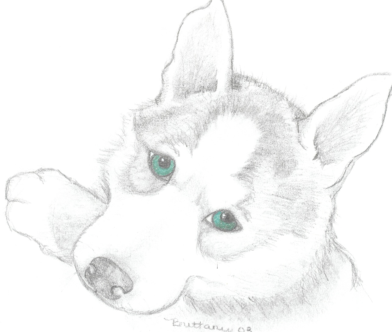Cute Husky Coloring Pages at GetDrawings.com | Free for ...