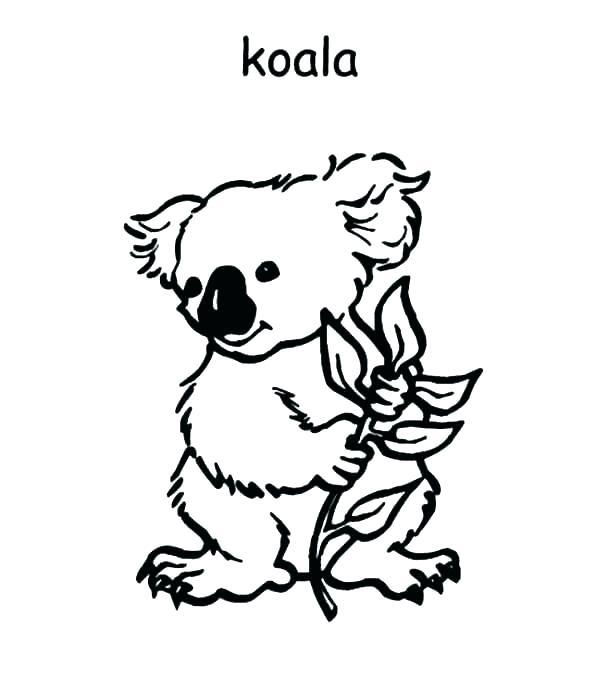 600x693 Koala Bear Coloring Page Coloring Pages Of Koalas Koala Bear