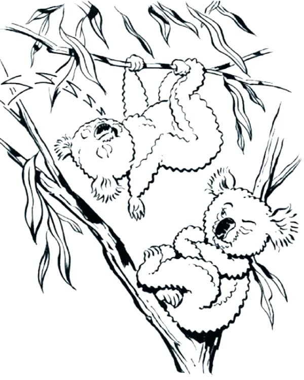 600x750 Koala Coloring Page Koala Coloring Pages Koalas Coloring Pages