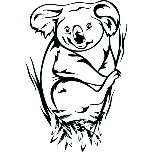 600x599 Best Koala Cute Images On Koalas Baby Koala And Koala Bears Koalas