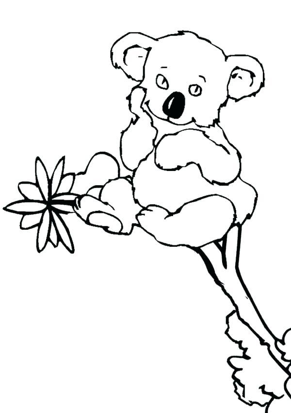 600x850 Coloring Pages Of Koalas Koala Coloring Page Koala Coloring Pages
