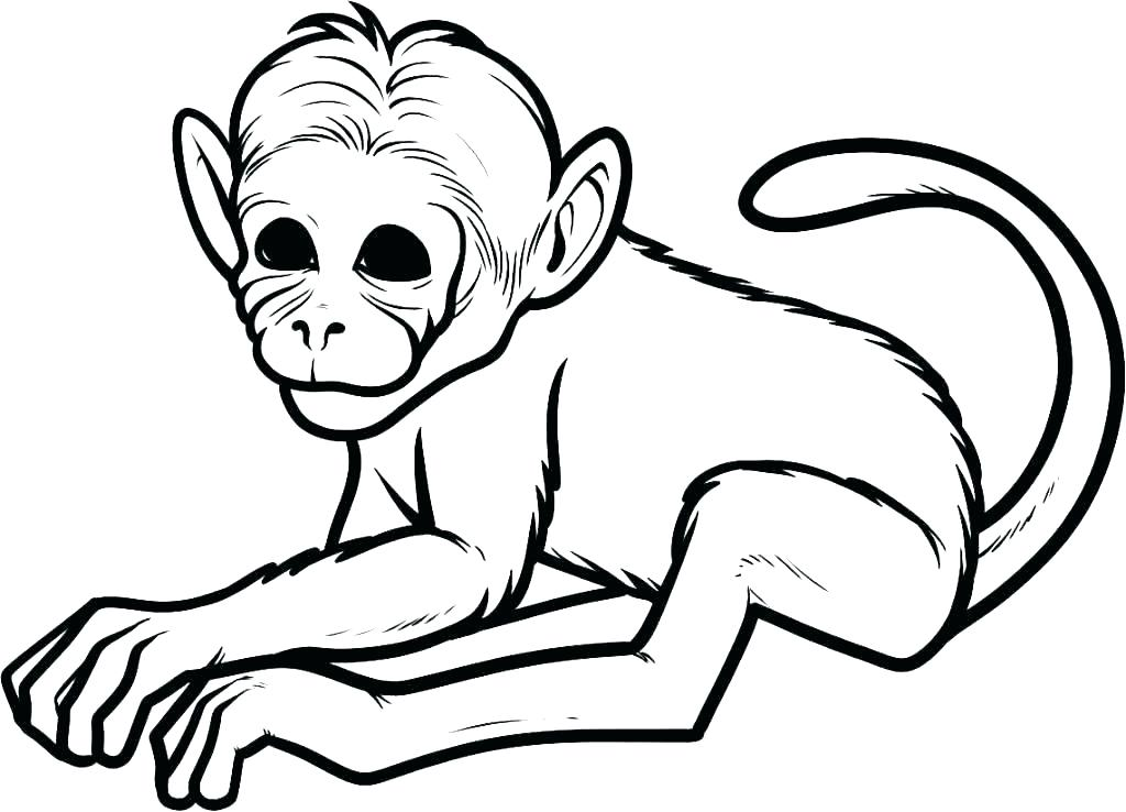 1024x738 Cute Monkey Coloring Pages Monkey Color Page Free Cute Monkey